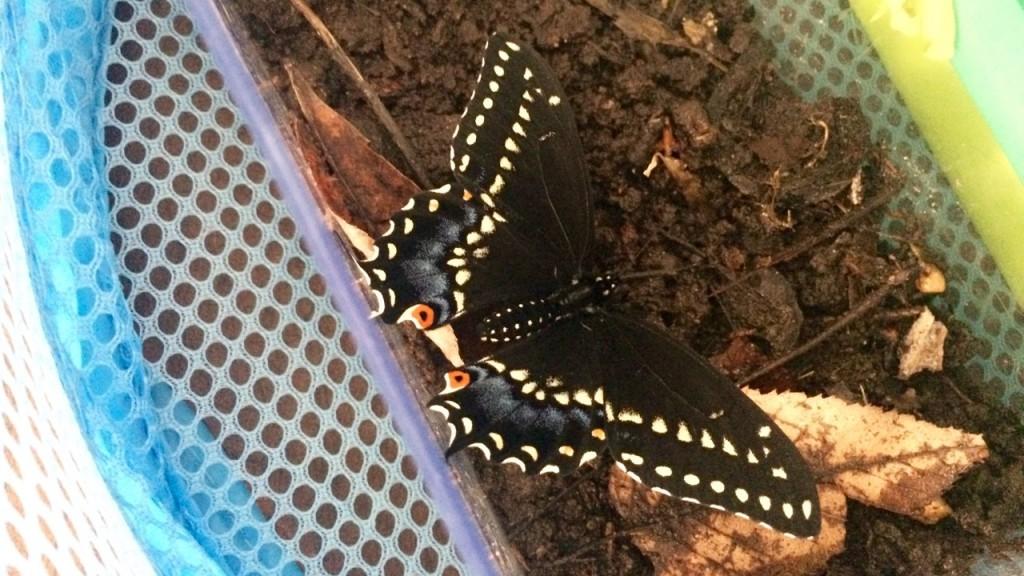 Creativity in Children: Raising Wild Butterflies